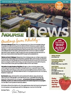 Strawberry Plants Best Selection And Highest Quality At Nourse Farms