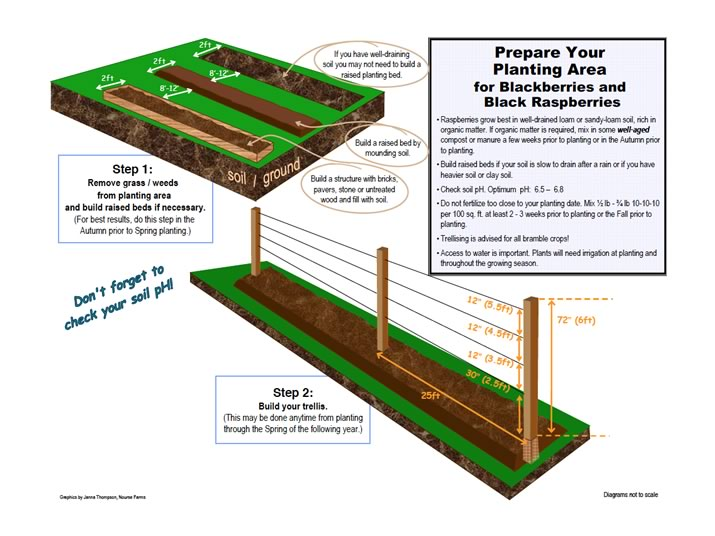 prepare your space for blackberry planting