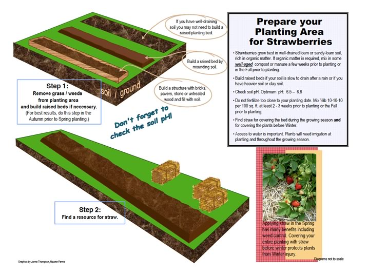 prepare your space for strawberry planting
