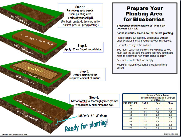 prepare your space for blueberry planting