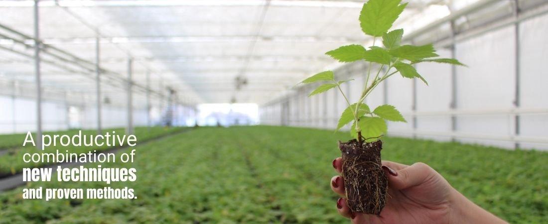 Nourse Farms The Best Berry Plants Since 1932