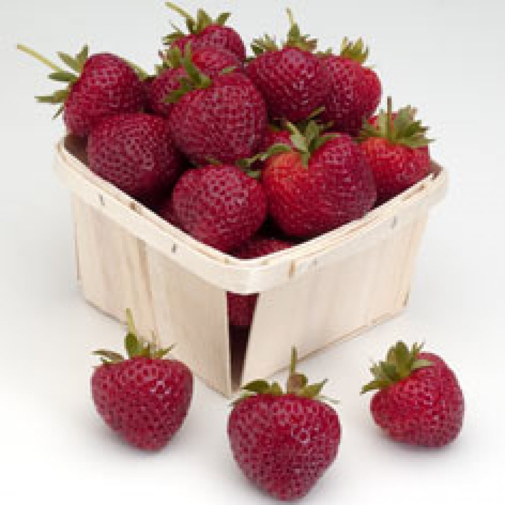Evie 2 Strawberry Plant