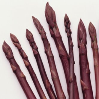 Purple Passion Purple Asparagus Roots