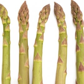 Jersey Supreme Asparagus Roots Green Asparagus Roots