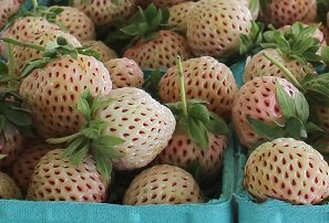 Natural Albino® Pineberry at Berry Tent