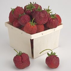 All Season Strawberry Collection Berry Collections Strawberry Collections