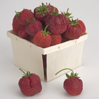 Junebearing Easy-Starter Strawberry